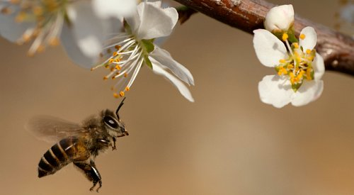 UBCO hosting free talk on native bees – and how to help conserve them