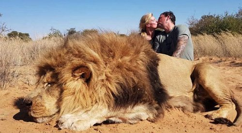 Alberta couple branded 'sick' after kissing over dead body of lion