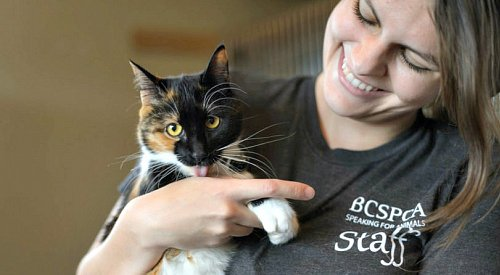 BC SPCA unveils new 5-year plan to help even more animals