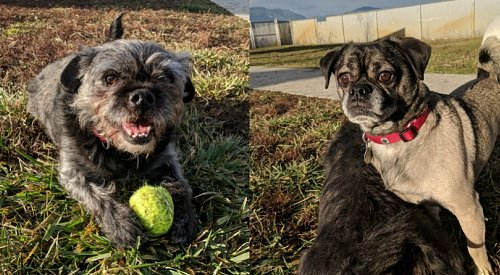 Furever Home Finder: Jedi and George