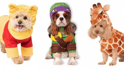 PHOTOS: Check out these adorable Halloween costumes for your pet
